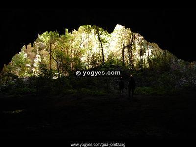 Hutan Purba