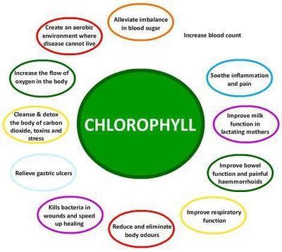 Klorofil Sebagai Sumber Nutrisi
