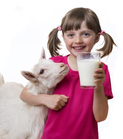 Sudah Tahu Manfaat Susu Kambing?