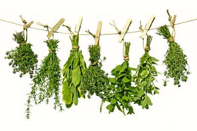 6. Herbs