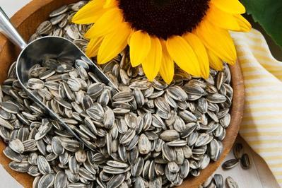 Sunflower Seeds atau Kuaci