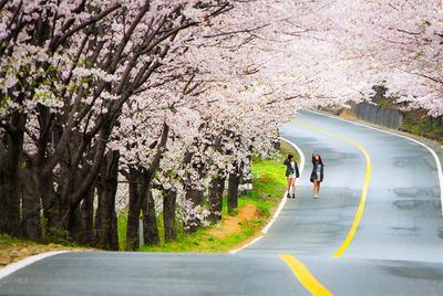 Pilihan Tempat Liburan di Korea yang Cocok Untuk Setiap Musim