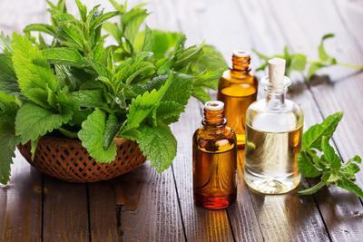 Inilah Manfaat Besar Peppermint Oil Yang Serbaguna Untuk Kecantikan Kulitmu