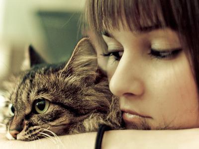 5 Tips Memelihara Kucing Bagi Pemula