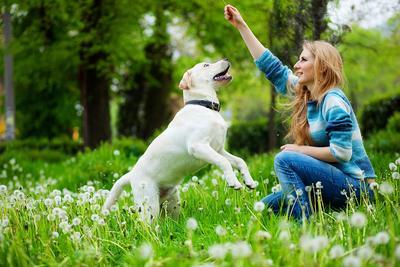 Hati-hati, 5 Kesalahan Inilah yang Harus Kamu Hindari Ketika Melatih Anjingmu!