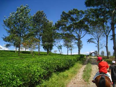 Inilah 5 Rekomendasi Tempat Wisata di Puncak yang Cocok untuk Didatangi Bersama Keluarga