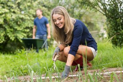 3 Langkah untuk Membuat Kebun Sendiri di Lahan Sempit