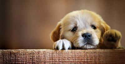 Ini Lho Tips Merawat Anak Anjing yang Baru Bergabung di Rumahmu!