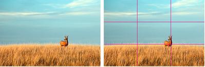 Baru Mulai Belajar Fotografi? Ini Dia 5 Tips Fotografi untuk Pemula Agar Hasilnya Keren