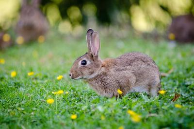 Animal Lovers Wajib Catat! 5 Merek Kosmetik Drugstore Ini Tidak Melakukan Tes pada Hewan Alias Cruelty Free