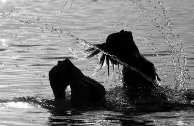 2. Keramas Dengan Air Dingin