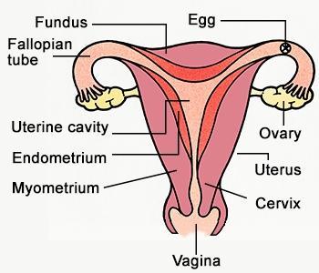 5. Gangguan pada Organ Reproduksi