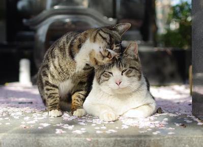 1. Jangan Berlebihan Menunjukkan Rasa Cinta