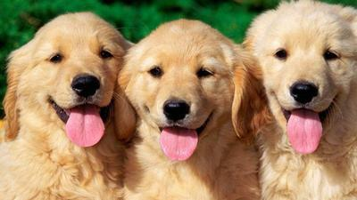 Pecinta Anjing Wajib Punya 6 Aplikasi Ini