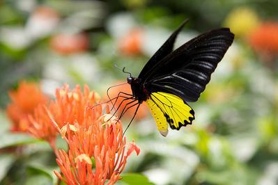 5. KL Bird Park & Butterfly Park
