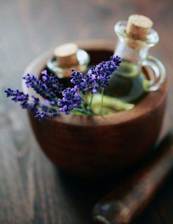 Menghirup Lavender