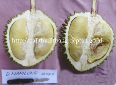 Durian Bangka Belitung