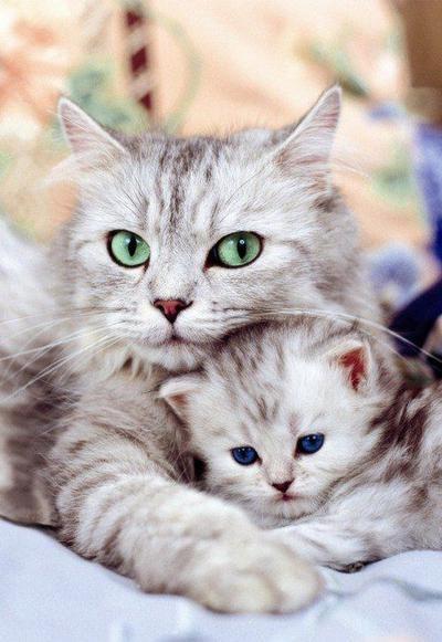 3. Mama akan melindungimu Nak