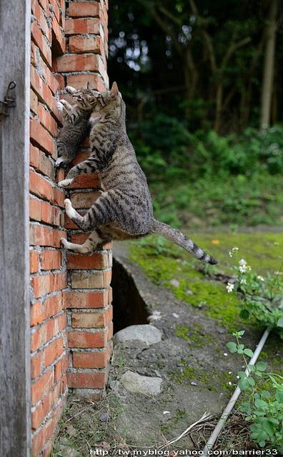 4. Ayo Nak kamu bisa memanjat dinding ini