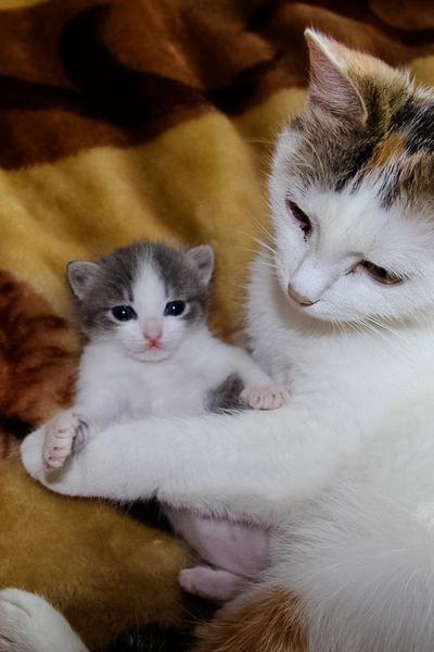 15. Jangan dekat-dekat dengan anakku