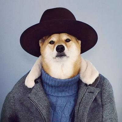 4. Menswear Dog, 145.569 followers