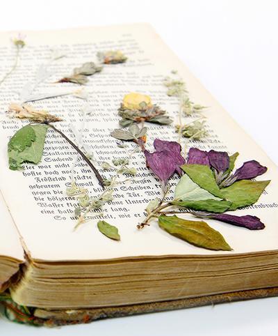 DIY: Pressed Flower Bookmark - Membuat Pembatas Buku dari Bunga Kering