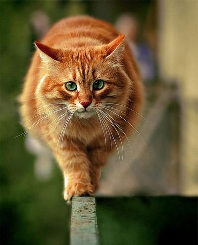 Gemuknya Kucing-Kucing Ini Akan Membuatmu Tersenyum
