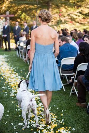 11. Pernah liat anjing mengantar pengantin wanita ke pelaminan sebelumnya?