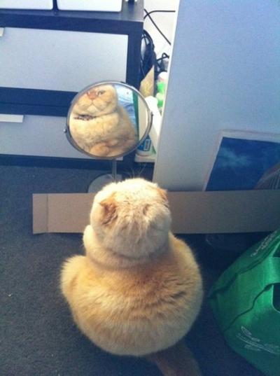 11. Siapa kucing gendut itu?
