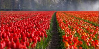 Inilah Tempat Wisata Populer di Belanda
