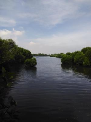 Wisata Jakarta, Hutan Mangrove Pantai Indah Kapuk