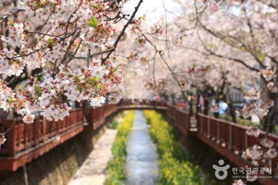 Tempat Terbaik Menikmati Musim Semi di Korea Selatan Part 1
