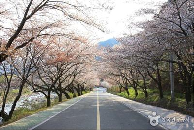 Hadong's Ssanggyesa Temple Simni Cherry Blossom Road