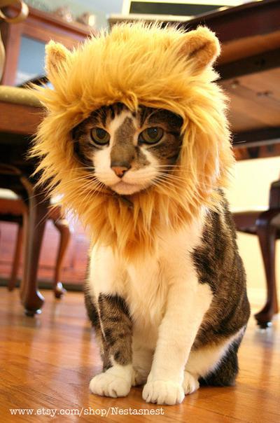 5 Kucing ini Berdandan dengan Kostum yang Membuatmu Semakin Ingin Menggendongnya
