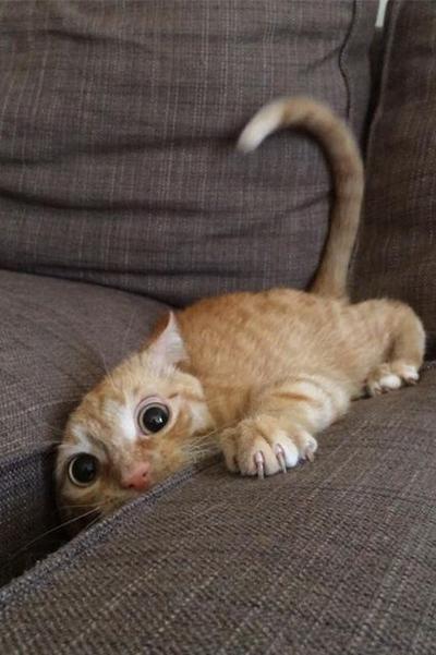 5 Ekspresi Kucing yang Mengundang Tawa