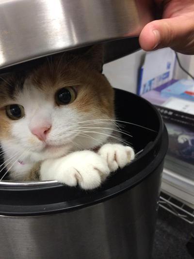 3. Di dalam tempat sampah