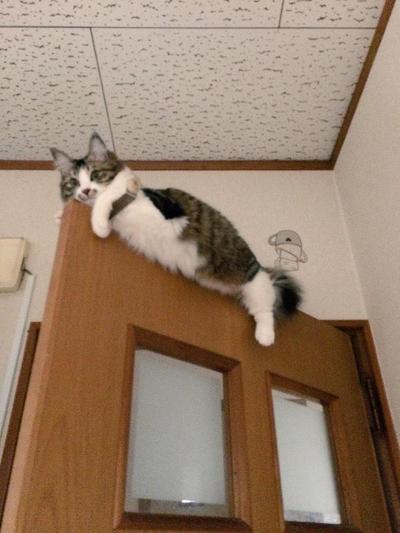 4. Di atas daun pintu