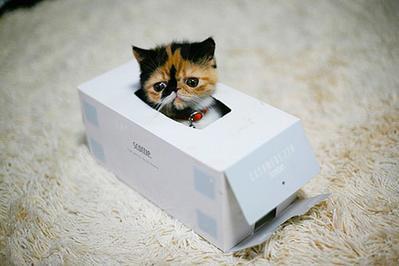 5. Di dalam kotak tissue