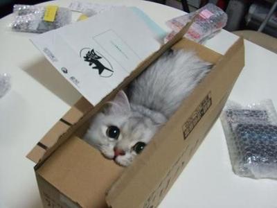 7. Di dalam paket