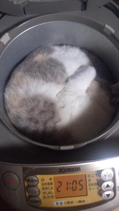 8. Di dalam rice cooker