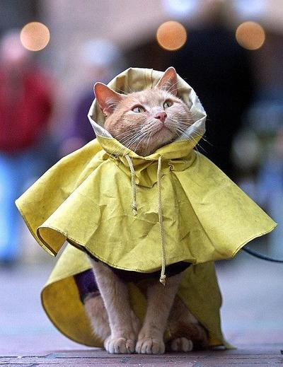 """""""Ah..Sepertinya Hujannya Sudah Mulai Reda nih."""""""