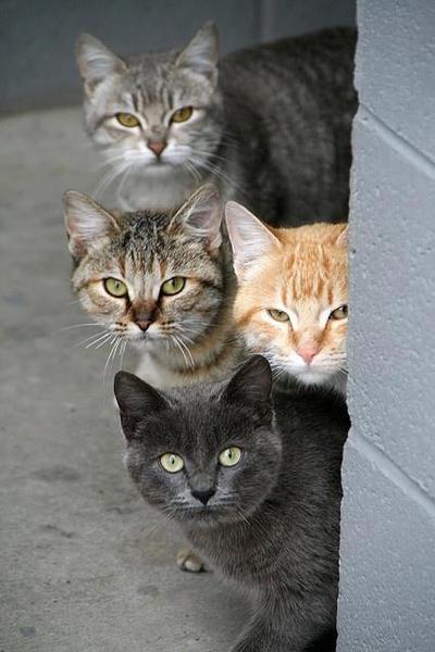 Kucing-kucing ini siap menangkap pencurinya!