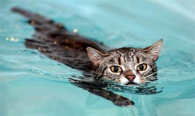 Tingkah Laku Lucu Hewan ketika Berada di Air