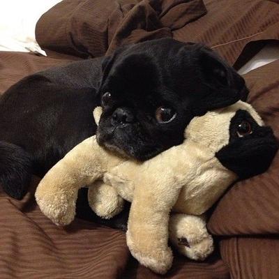 Pose Menggemaskan Para Anjing Saat Bermain dengan Boneka Mereka (Part 1)