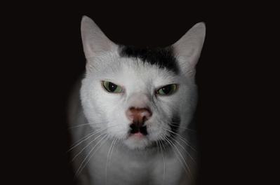 Kucing dengan Motif Bulu yang Tak Biasa!