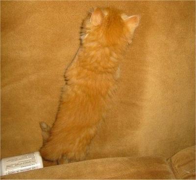 Kucing pun Pandai Berkamuflase? Ini Buktinya!