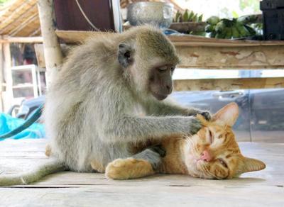 Kera & Kucing