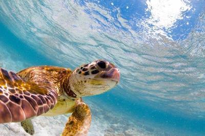 Menikmati indahnya bawah laut