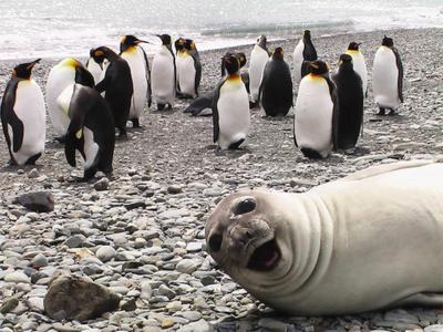 Selfie sama pinguin! Say cheese!
