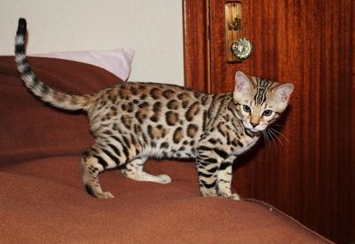 Wow, leopard kecil yang manis!